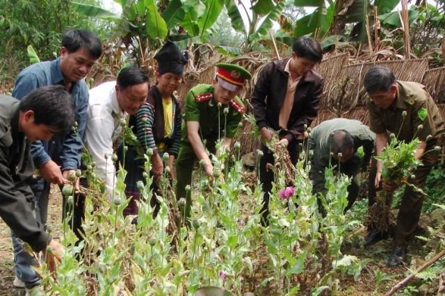 Điện Biên: Nỗ lực đấu tranh đẩy lùi tội phạm ma tuý