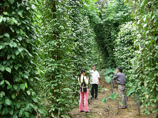 Quảng Bình phát triển kinh tế trang trại theo hướng bền vững