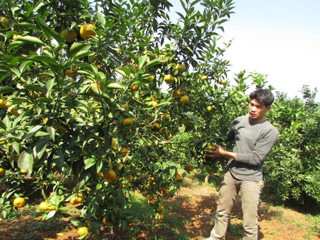 Hòa Bình: Nâng cao đời sống người dân từ cải tạo vườn tạp