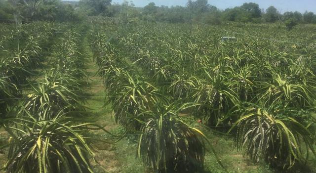 Nông nghiệp Long An hướng đến nâng cao giá trị gia tăng và phát triển bền vững