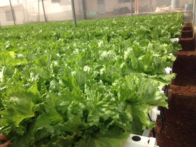 Tháo gỡ khó khăn vướng mắc thúc đẩy sản xuất nông nghiệp ứng dụng công nghệ cao