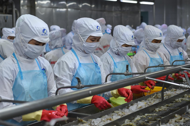 Phát triển ngành tôm Việt Nam trở thành ngành công nghiệp sản xuất lớn, bền vững