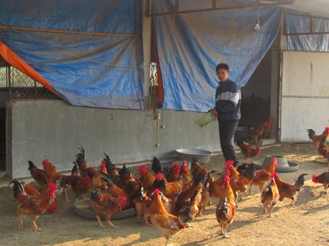 Hòa Bình: Tăng cường kiểm tra, xử lý các vi phạm trong sản xuất, kinh doanh sản phẩm nông, lâm, thủy sản