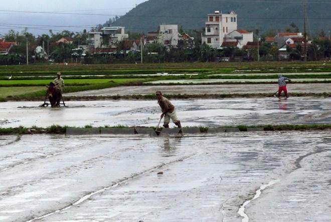 Gần 59.000 ha đã có nước phục vụ gieo cấy vụ Đông Xuân