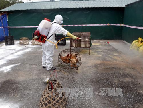 Tăng cường các biện pháp ngăn chặn các chủng vi rút cúm nguy hiểm xâm nhiễm vào Việt Nam