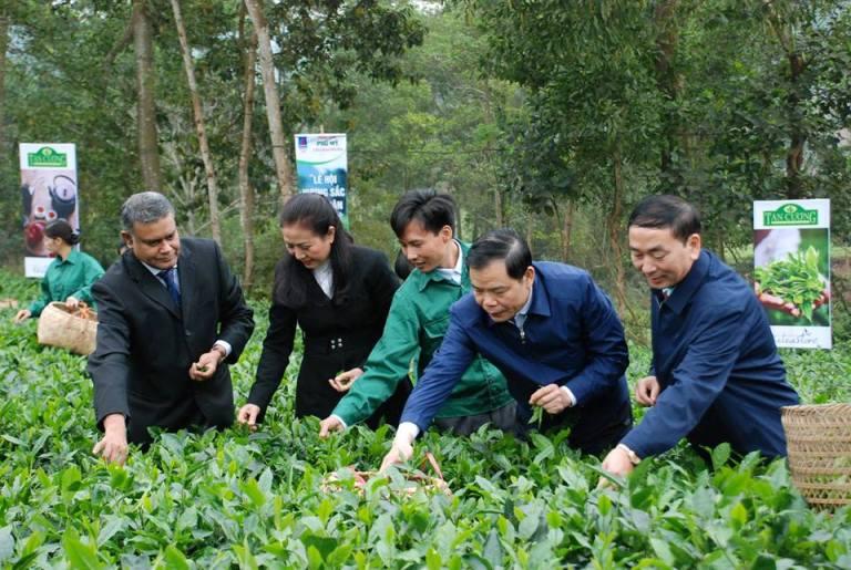 Từng bước đưa chè Thái Nguyên vươn xa trên thị trường thế giới
