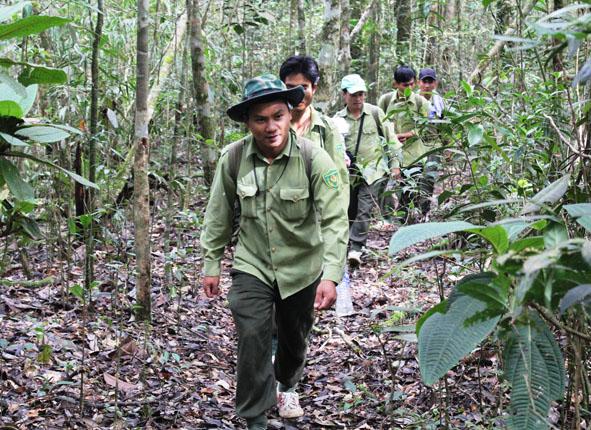 Đắk Lắk phòng chống cháy rừng trong dịp Tết Nguyên đán