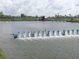 Vĩnh Long phát triển thủy sản theo hướng đa dạng hóa