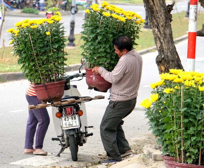 Đà Nẵng ngập tràn sắc hoa Xuân