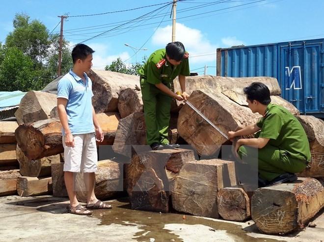 Hải Dương liên tiếp bắt giữ các vụ vận chuyển gỗ lậu ngay đầu năm mới