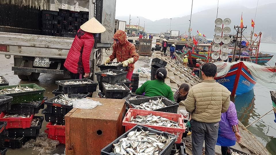 Ngư dân các tỉnh miền Trung được mùa cá trích, cá cơm