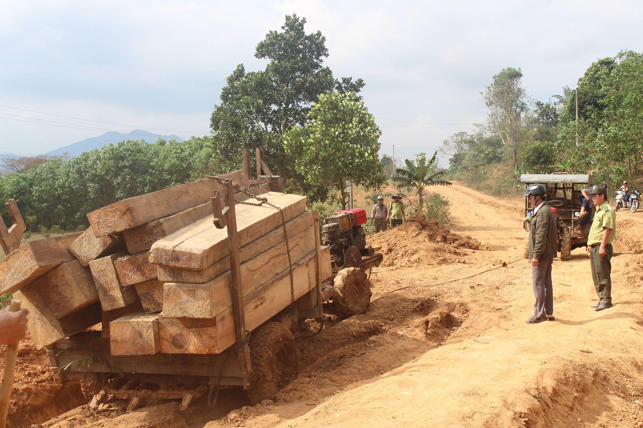Khẩn trương điều tra, xử lý vụ phá rừng, khai thác gỗ trái phép tại M'Đrắk