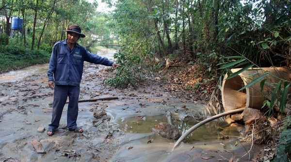 Cá chết trên sông Bồng Miêu do nhiều nguồn thải