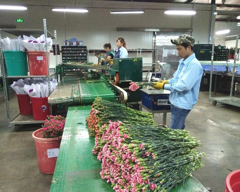 Đưa cán bộ trẻ có chuyên môn về công tác tại các Hợp tác xã nông nghiệp