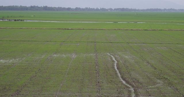 Long An: Hiệu quả từ ứng dụng công nghệ cao vào sản xuất nông nghiệp
