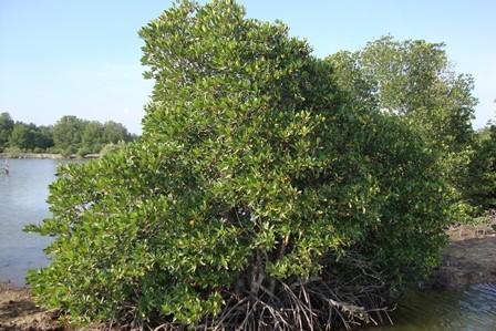 Bà Rịa – Vũng Tàu đầu tư trên 100 tỷ cho trồng rừng