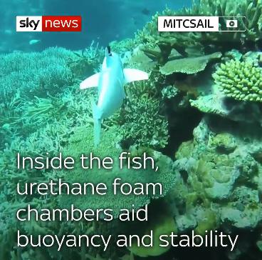 Robot cá SoFi có thể bơi mềm mại trong nước
