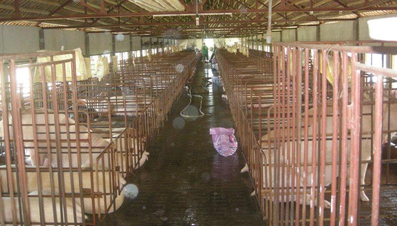 Để chăn nuôi phát triển bền vững ở Việt Nam