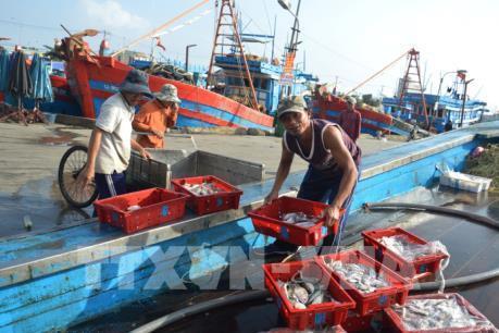 """Khắc phục """"thẻ vàng"""" IUU: Quảng Trị giám sát tàu cá khai thác xa bờ"""