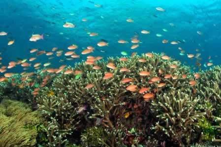 Liên hợp quốc đề cao tầm quan trọng của hợp tác bảo vệ hệ sinh thái biển