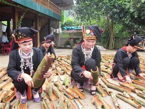 Trồng quế đem lại giá trị kinh tế cao cho người dân Yên Bái