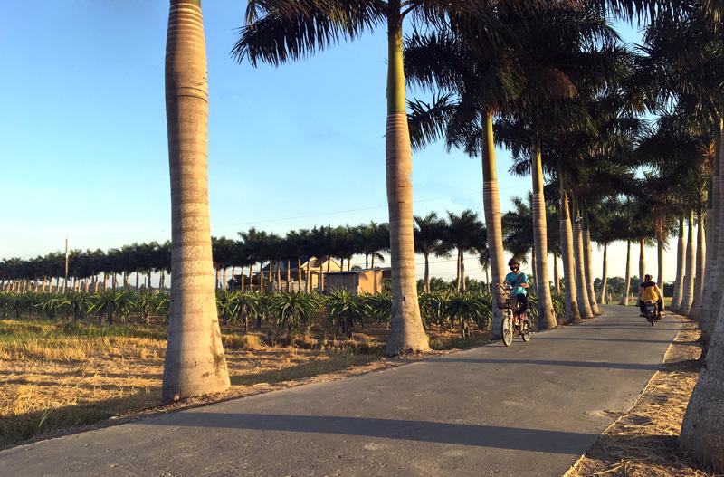 Ngắm con đường nông thôn đẹp nhất của tỉnh Long An
