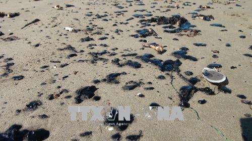 Khẩn trương xử lý sự cố dầu loang vón cục trôi dạt vào bờ biển Bến Tre