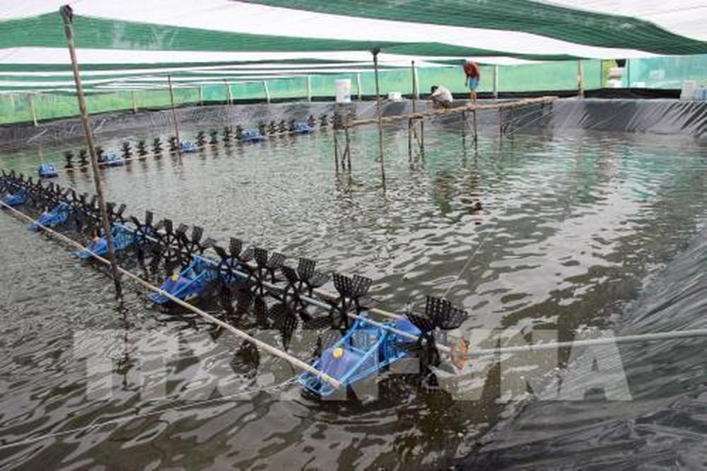 Cà Mau siết chặt quản lý trong nuôi tôm siêu thâm canh