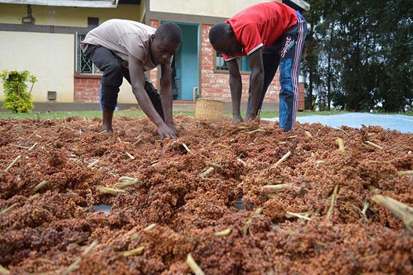 Hạn hán, bất ổn chính trị cản trở sự tăng trưởng kinh tế Đông Phi