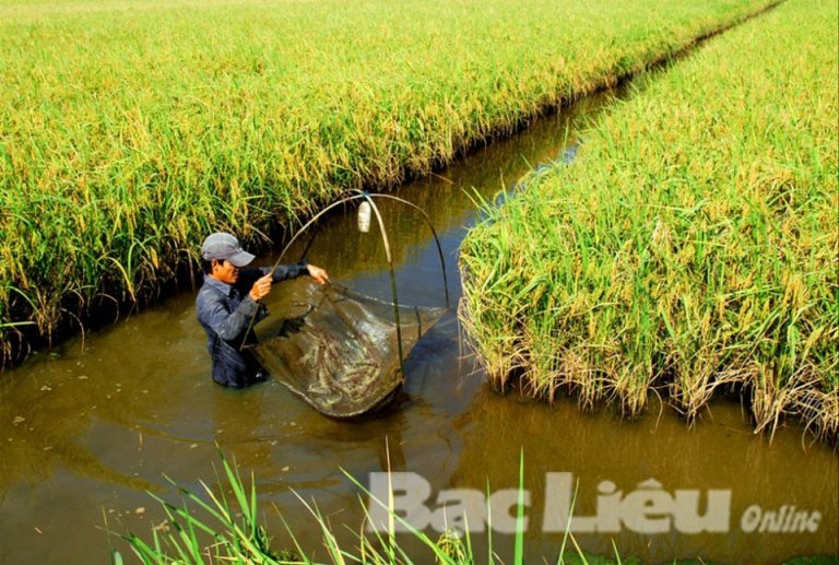 Bảo đảm nguồn nước cho mô hình sản xuất tôm - lúa tại Bạc Liêu