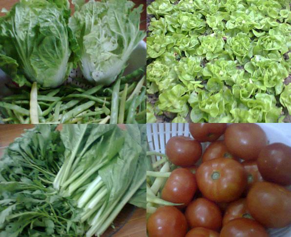 FAO: Thương mại lương thực toàn cầu phải thúc đẩy chế độ ăn uống lành mạnh