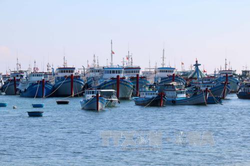 """Khắc phục """"thẻ vàng"""" IUU: Tiến tới nghề cá có trách nhiệm"""