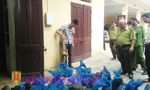 Thanh Hóa: Bắt vụ vận chuyển gần 340 kg tê tê quí hiếm