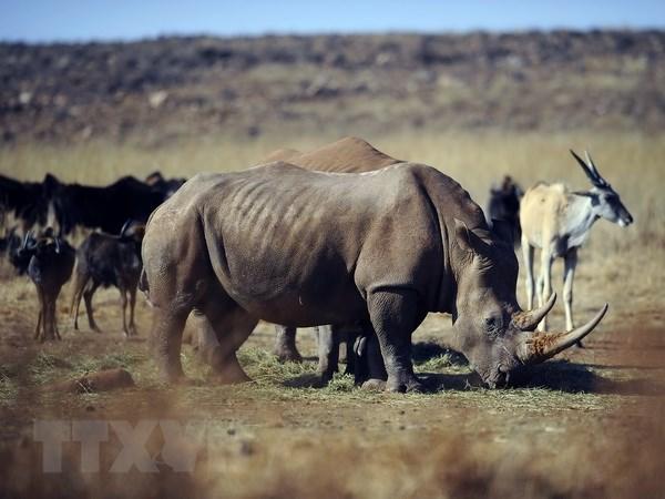 Cuộc thi phim ngắn về đề tài phòng chống buôn bán trái phép động vật hoang dã