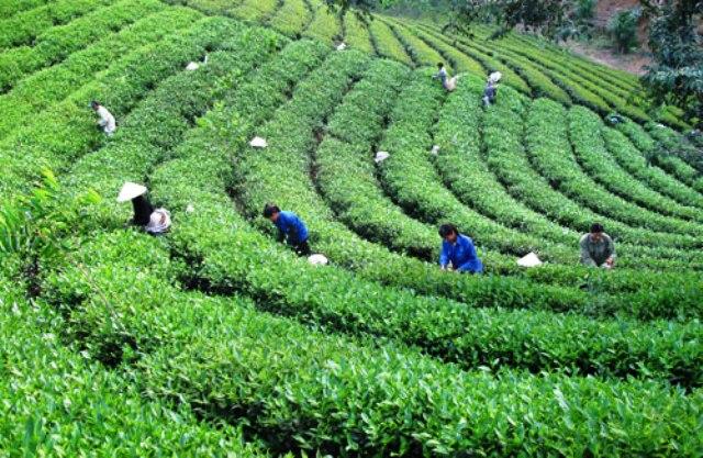 Tiềm năng phát triển làng nghề ở Thái Nguyên