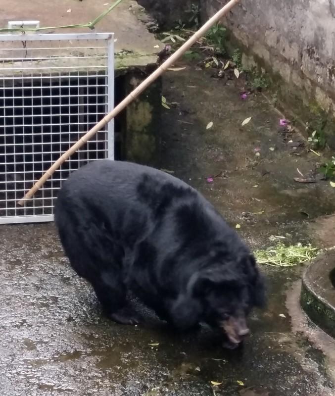 Giải cứu hai cá thể gấu ngựa ở Lâm Đồng