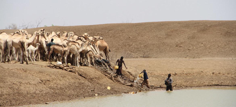 FAO: 39 quốc gia trên thế giới cần viện trợ lương thực từ bên ngoài