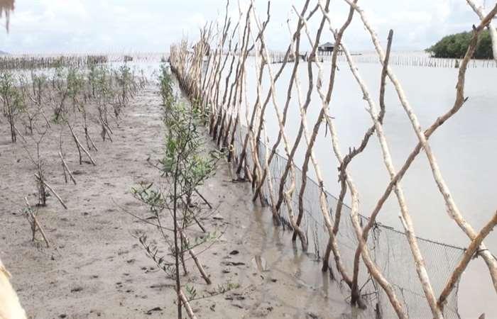 Kiên Giang tạo bãi ngăn sạt lở bờ biển