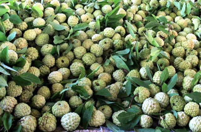 Giới thiệu sản phẩm nông nghiệp na Chi Lăng tới đông đảo người tiêu dùng