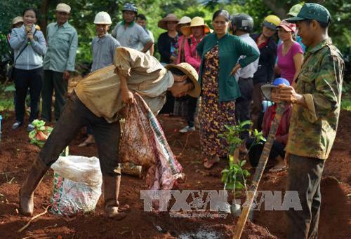 Các tỉnh Tây Nguyên trồng tái canh cà phê trong mùa mưa