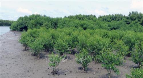 Đề nghị điều chỉnh giảm chỉ tiêu trồng rừng ven biển giai đoạn 2015 - 2020