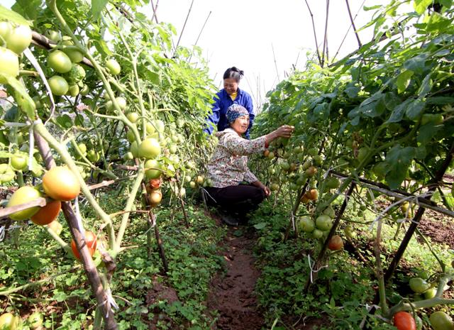 Phát huy vai trò của phụ nữ trong sản xuất, sử dụng thực phẩm an toàn