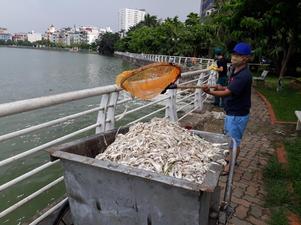 Khẩn trương khắc phục hiện tượng cá chết hàng loạt ở Hồ Tây