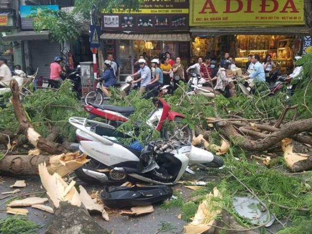 Ngăn chặn mối nguy hiểm từ cây xanh gãy đổ trong mùa mưa bão