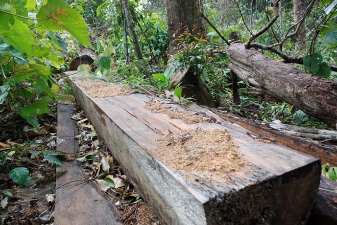 Khởi tố 8 vụ việc, xử lý 36 tập thể, 87 cá nhân để xảy ra phá rừng, khai thác rừng trái phép