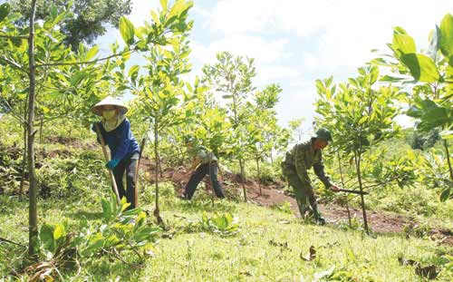 Gia Lai đảm bảo kế hoạch trồng mới 7.000 ha rừng