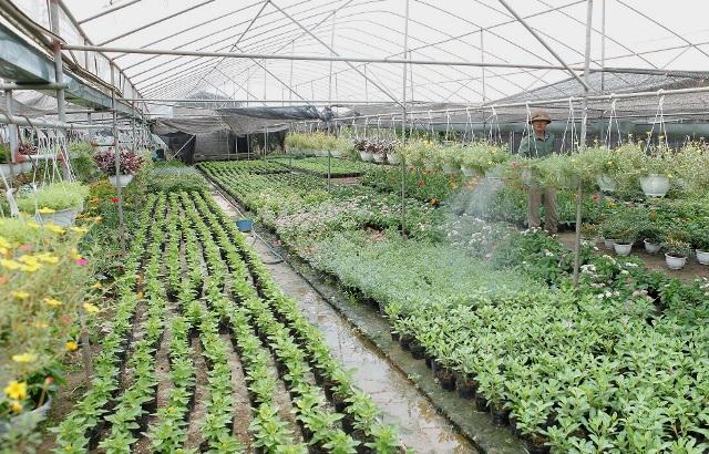 Xã Xuân Quan (Văn Giang, Hưng Yên): Nông dân làm giàu từ trồng hoa