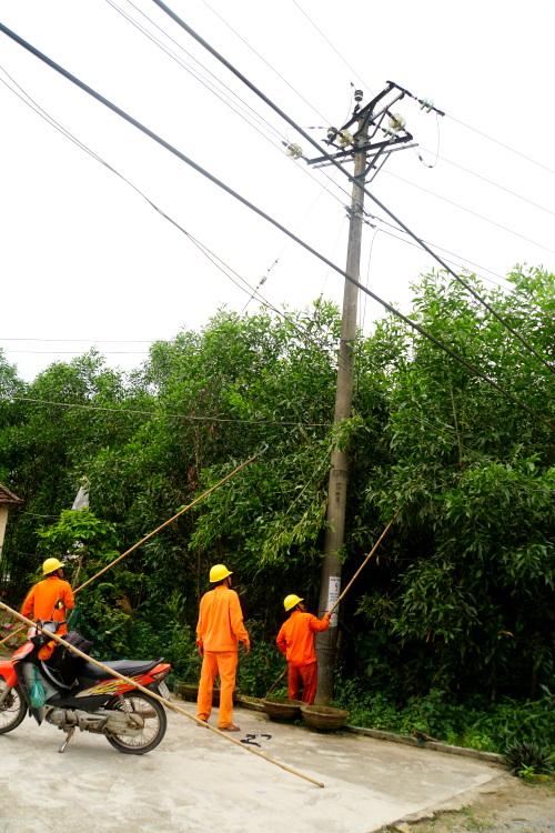 Quảng Ngãi báo động vi phạm hành lang an toàn điện