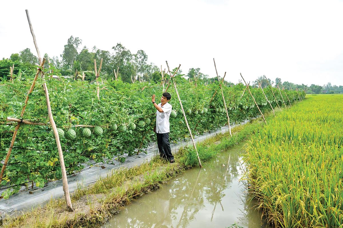 Đẩy nhanh thực hiện dự án chuyển đổi nông nghiệp bền vững