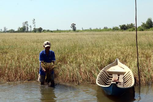 Xây dựng mô hình phát triển kinh tế ứng phó với xâm nhập mặn ở vùng đồng bằng sông Cửu Long
